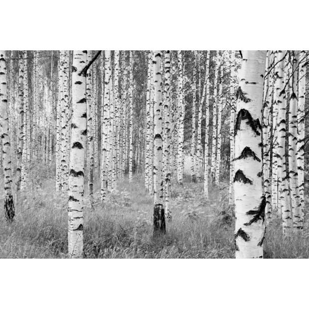 Woods Intissé